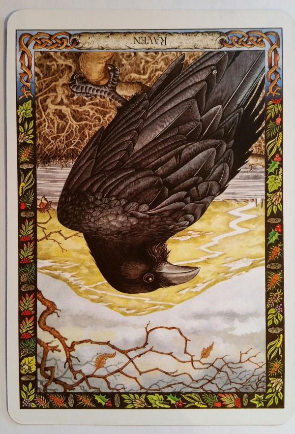 Raven (R)